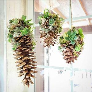 Tue Dec 15 2020 10am, Three Large Succulent Pinecones, 201215101